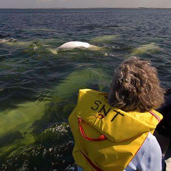 16-whalewatcher_350