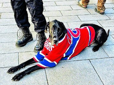 Something Else to Love About Canada: Even Our Pets Root for the Home Team