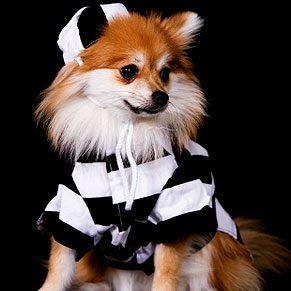Dog in Prisoner uniform