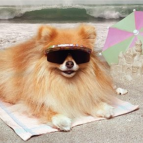 10 Dogs Chilling in Summer