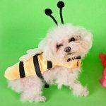 8 Funny Pet Outfits