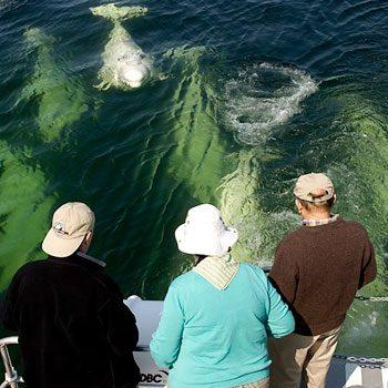 2-whalewatching_350