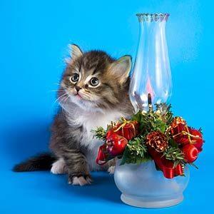 20 Heartwarming Holiday Pet Photos
