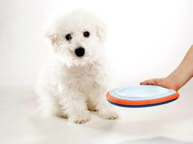Secrets of pets #26: