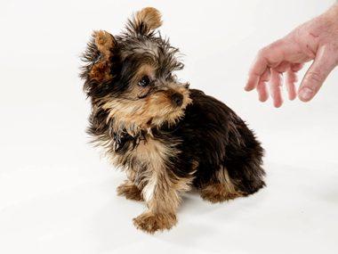 Pet care secrets #22: