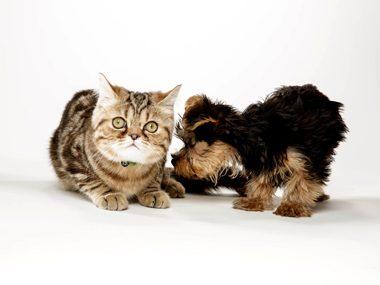 Cat care advice #27: