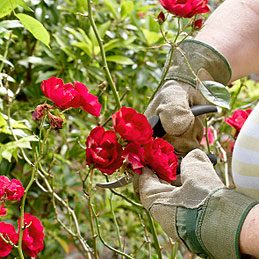 Protect Your Hands When Pruning