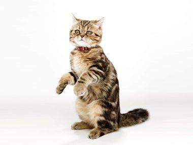 Secrets of cats #29: