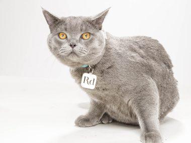 Cat secrets #31:
