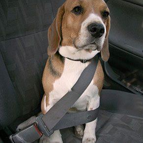 2. Seat Belts