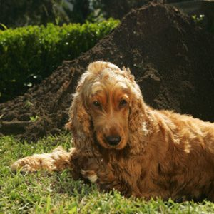 Bad Pet Habit #2: Your dog repeatedly digs up the same spot in the yard.