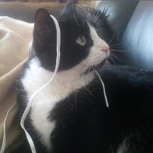 Boo Radley, Tuxedo Cat