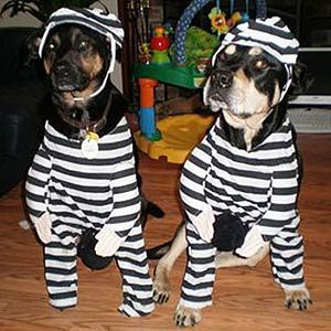 A Couple of Condogs & 12 Hilarious Halloween Dog Costumes