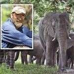 Hero Pets: The Mournful Elephant Herd
