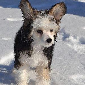 13 Adorable Winter Pet Photos