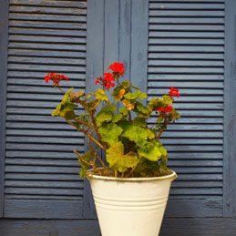 2. Garden in a Bucket