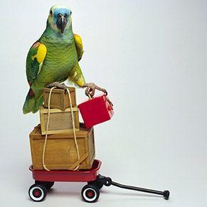 The Best Bird Breeds for Beginners