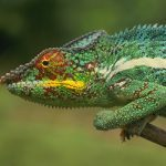 Reptile or Amphibian: The Right Pet for You?