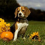 The Best Dog Breed for You