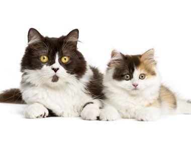Cat care advice #33: