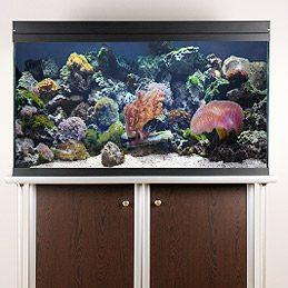 4. Clean Your Aquarium