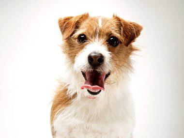 Pet care tips #6: