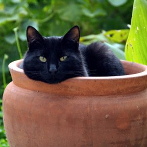 Bad Pet Habit #3: Your cat keeps digging up the plants in the garden.