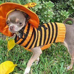 A Pumpkin Puppy
