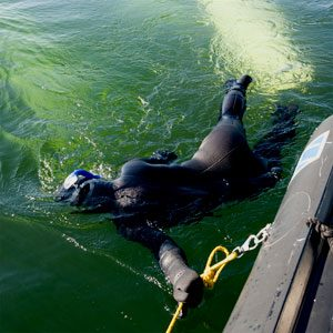 Snorkelling with Belugas in Churchill, Manitoba