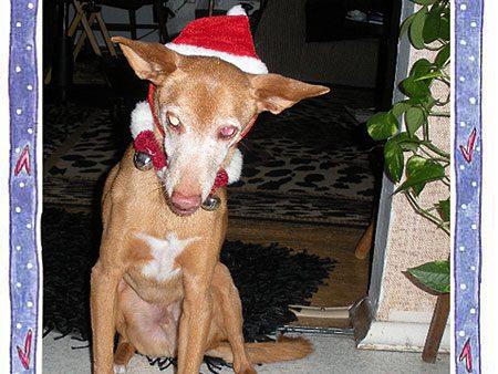 Santa Riley