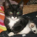 5 Adorable Cat Pics Taken by Reader's Digest Fans