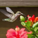 4 Ways To Attract Birds To Your Garden
