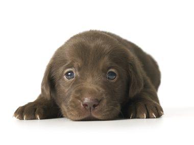 Secrets of pets #2: