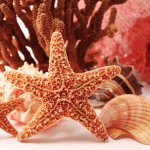 7. Cool it with the shells and coral