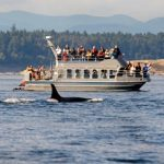 The Best Whale-Watching Trips in North America