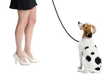 Dog training advice #40: