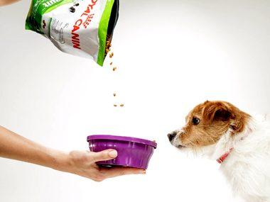 Pet care tips #44: