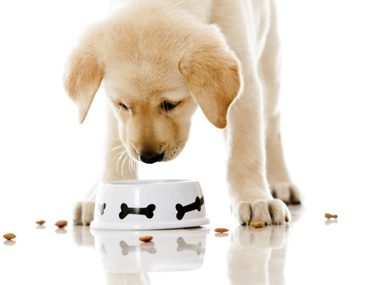 Pet feeding tips #46: