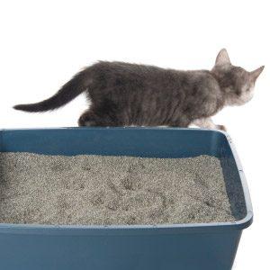 Bad Pet Habit #4: Your cat won't do its