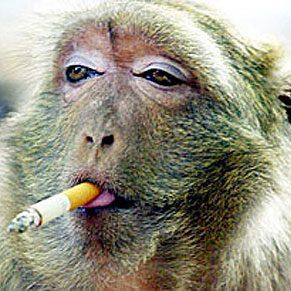 3. Monkeys