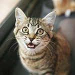 How to Decode Your Cat's Strange Behaviour