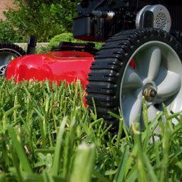 Vegetable Oil Facts: Lawn Clippings
