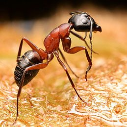 It's a Fact: Bay Leafs Keep Ants at Bay
