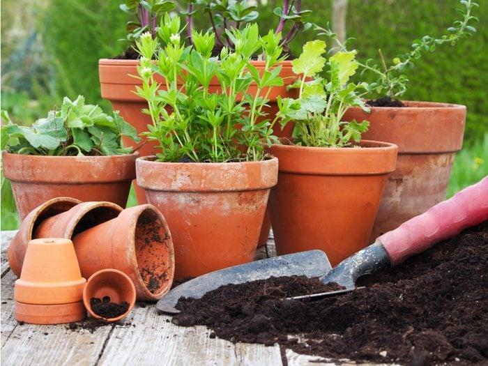 Use a Terracotta Flowerpot When Baking Bread