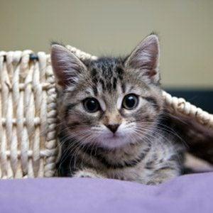 Bad Pet Habit #5: Your cat has