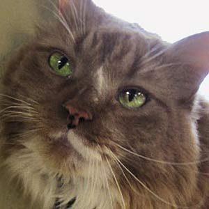 Hero Pets: The Lifesaving Kitty
