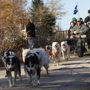 Don't-Miss Dog Carting in Churchill, Manitoba