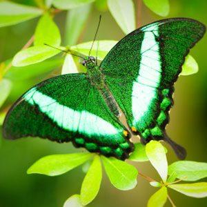 5. Butterfly Conservatory