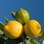 5 Things To Do with Lemons