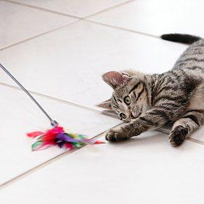 6. Cat Toys